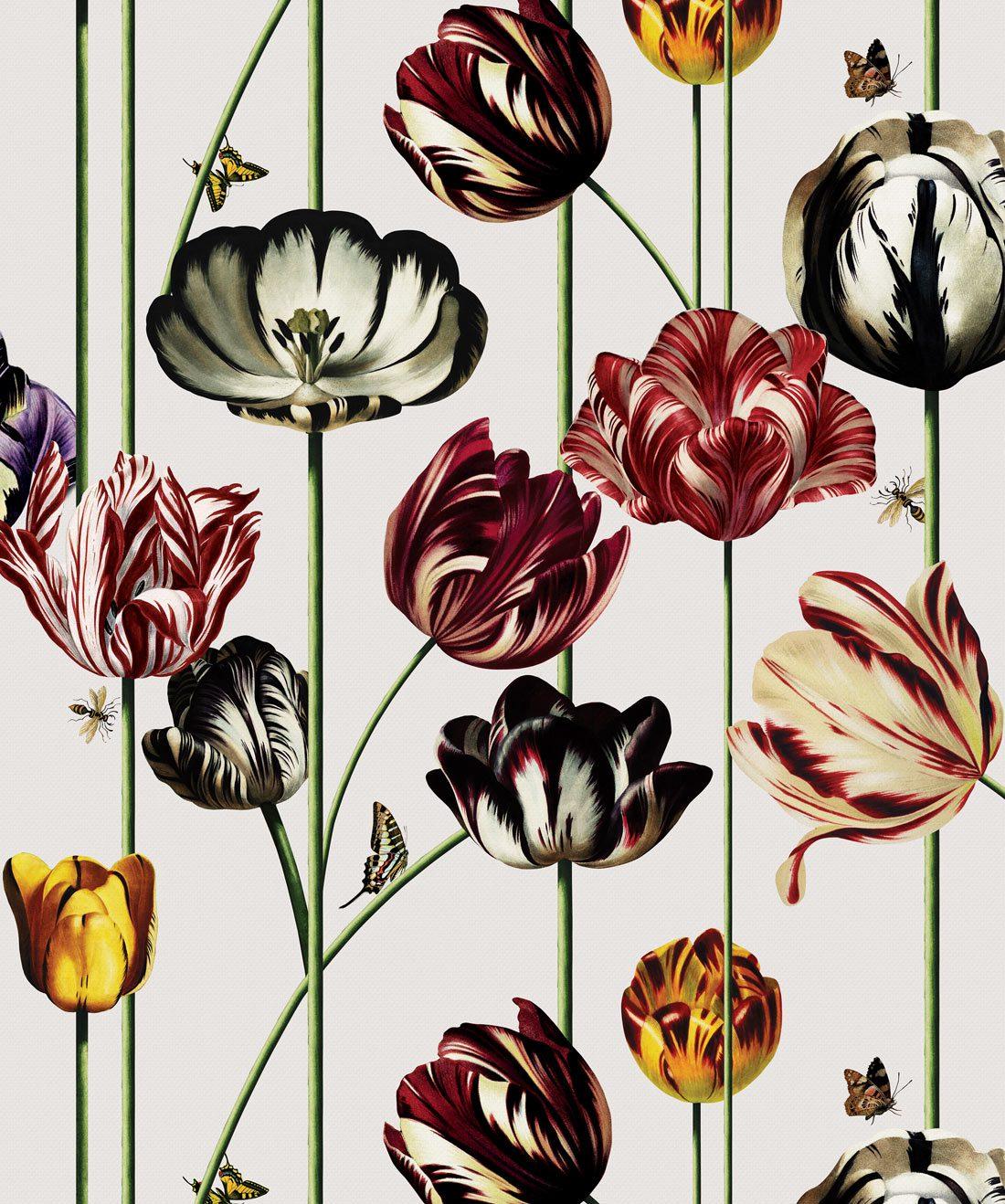 Tulipa Canvas