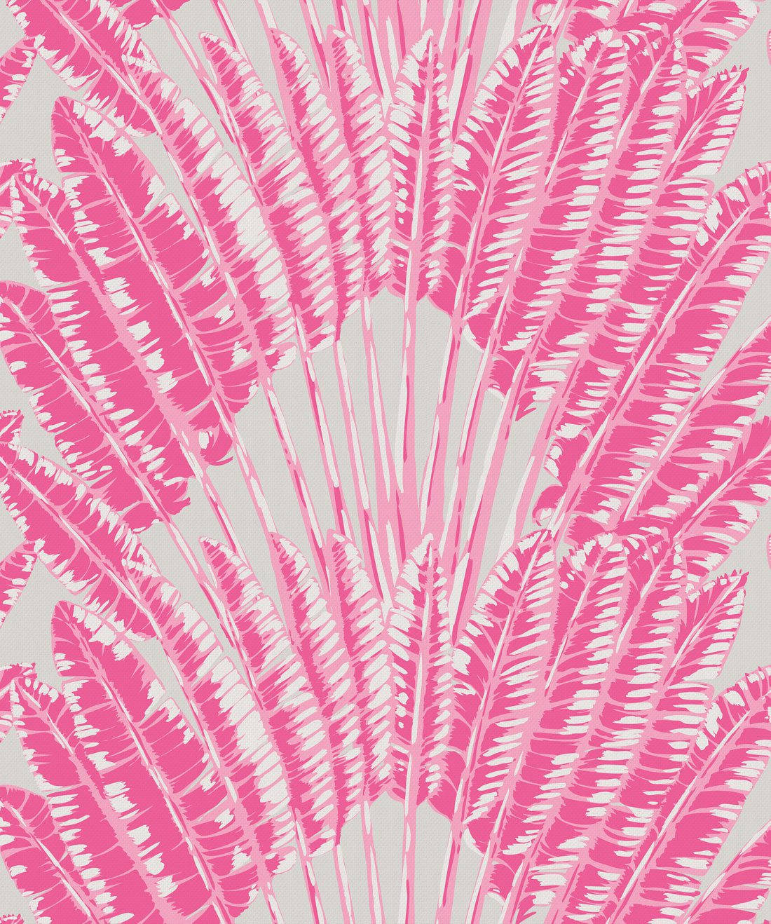 Feather Palm Pink