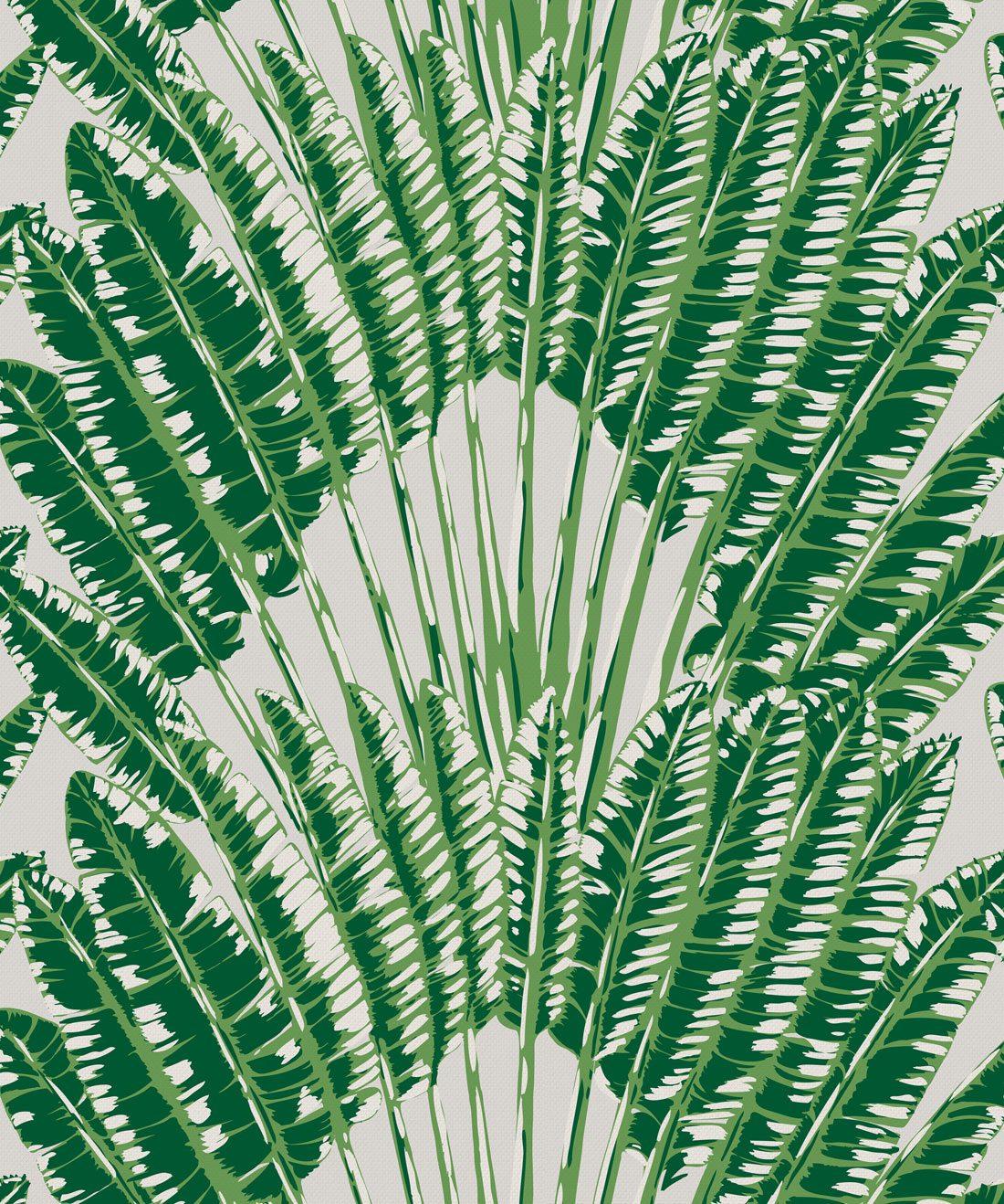 Feather Palm Aloha