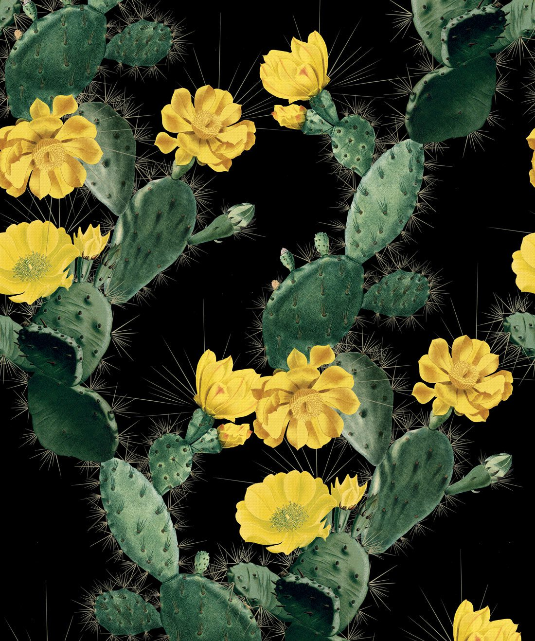 Cactus Yellow Night