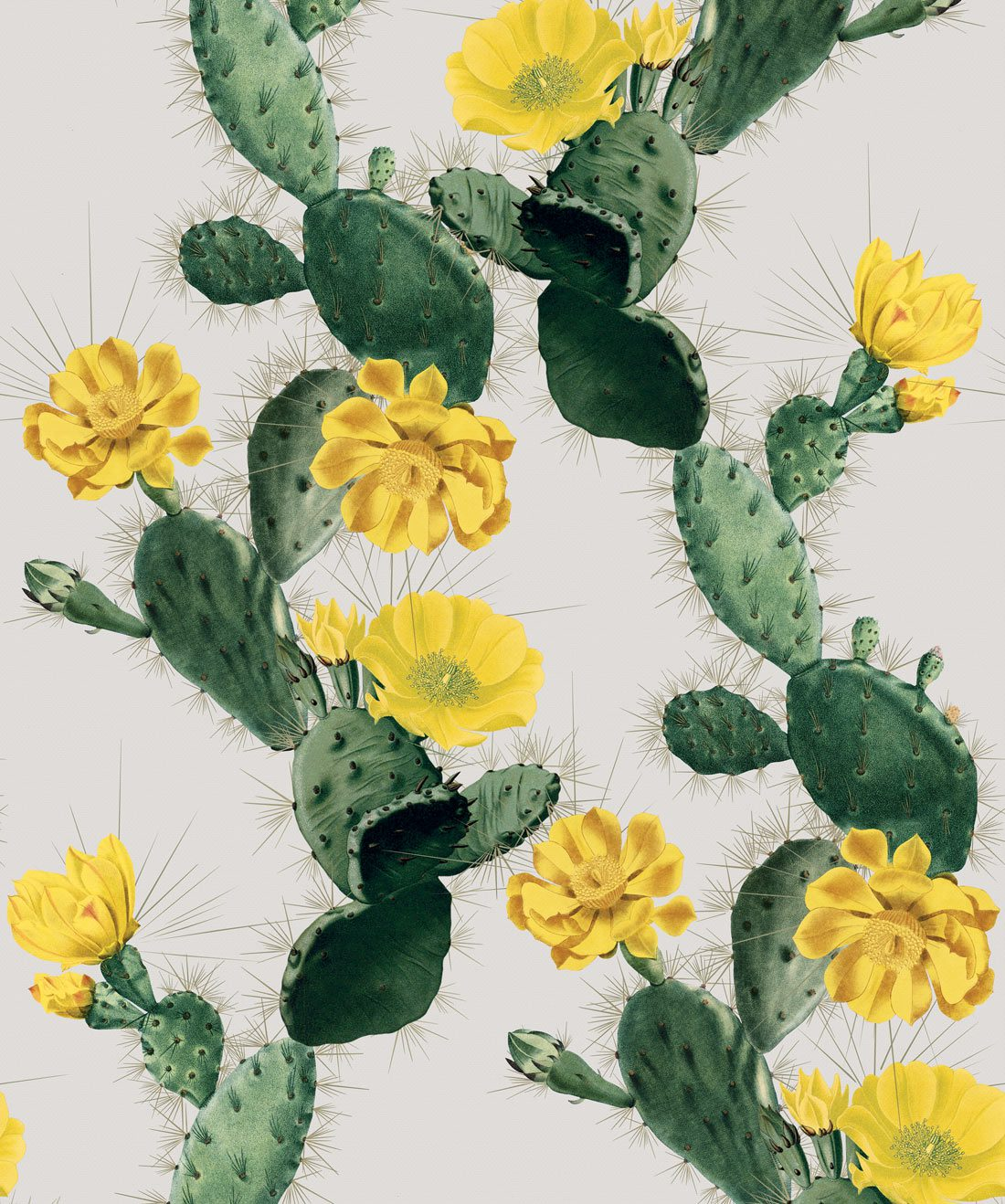 Cactus Yellow Day