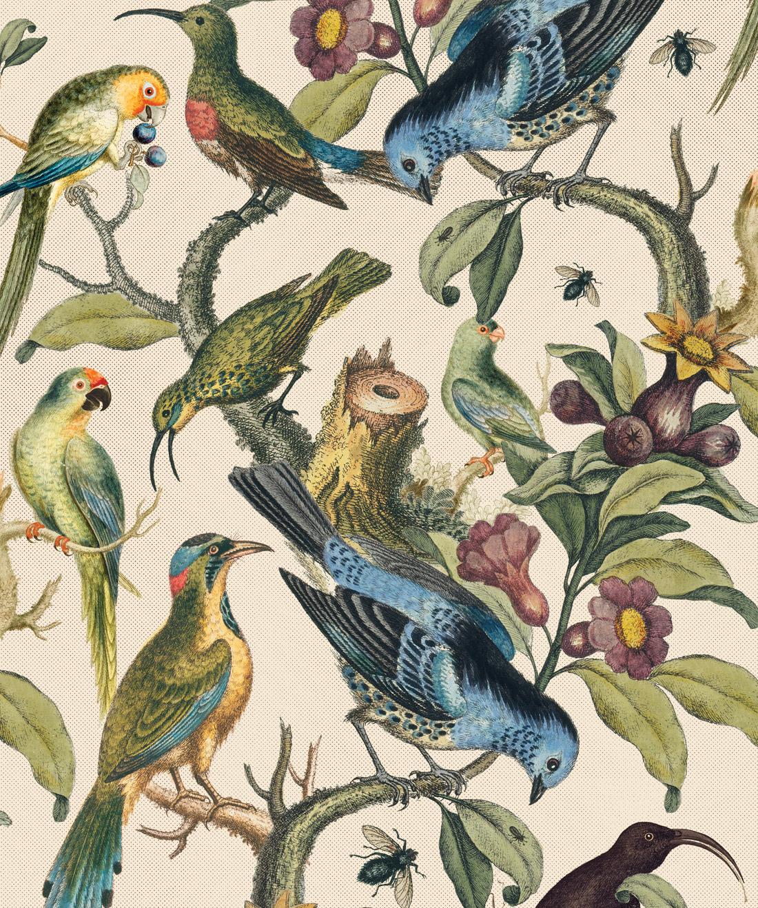 Ornithology Wallpaper