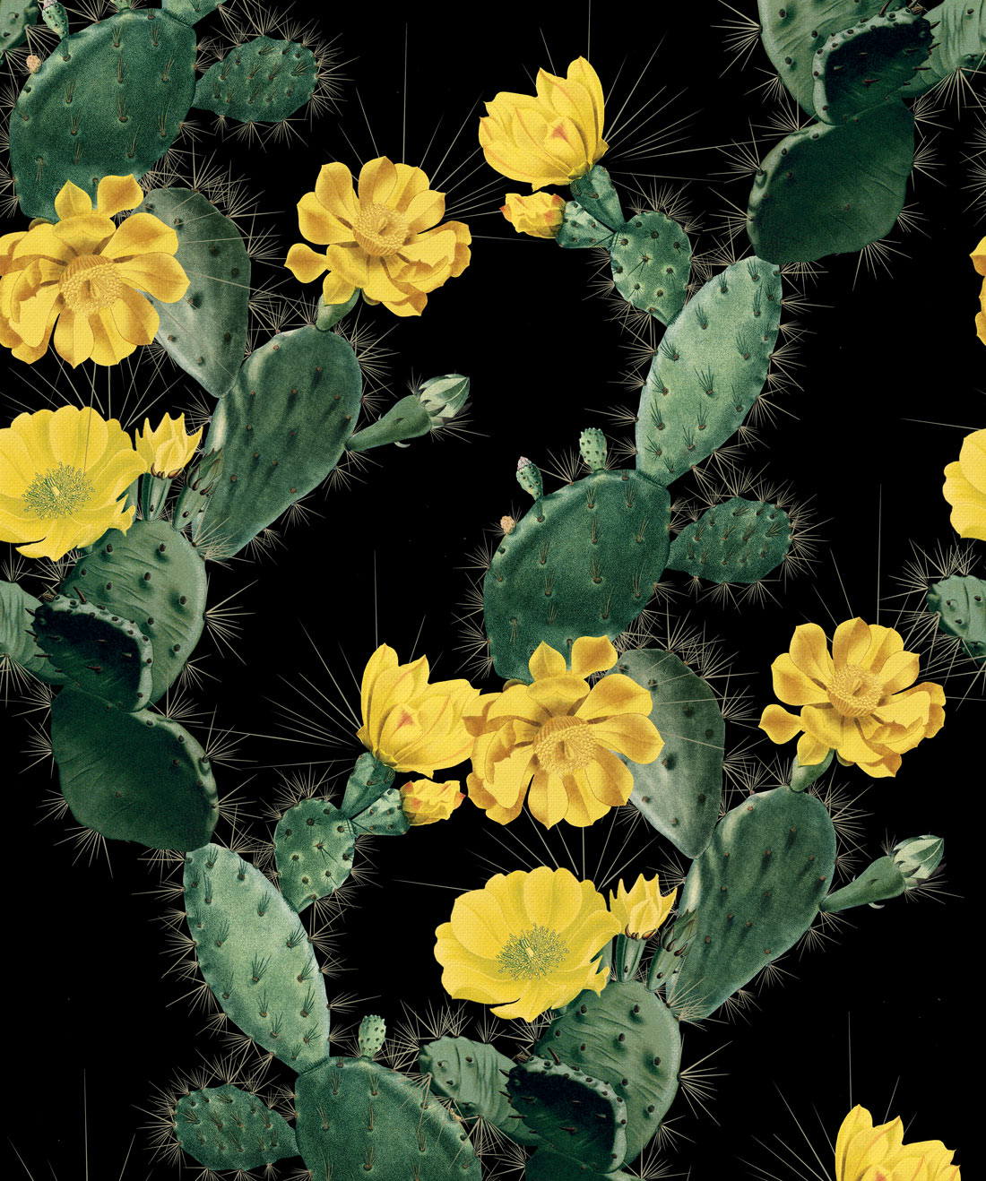 Cactus Yellow Night