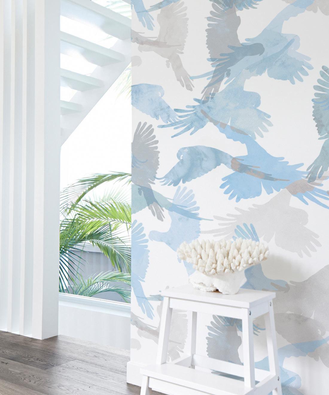 Lorikeets Bird Wallpaper Buccaneers
